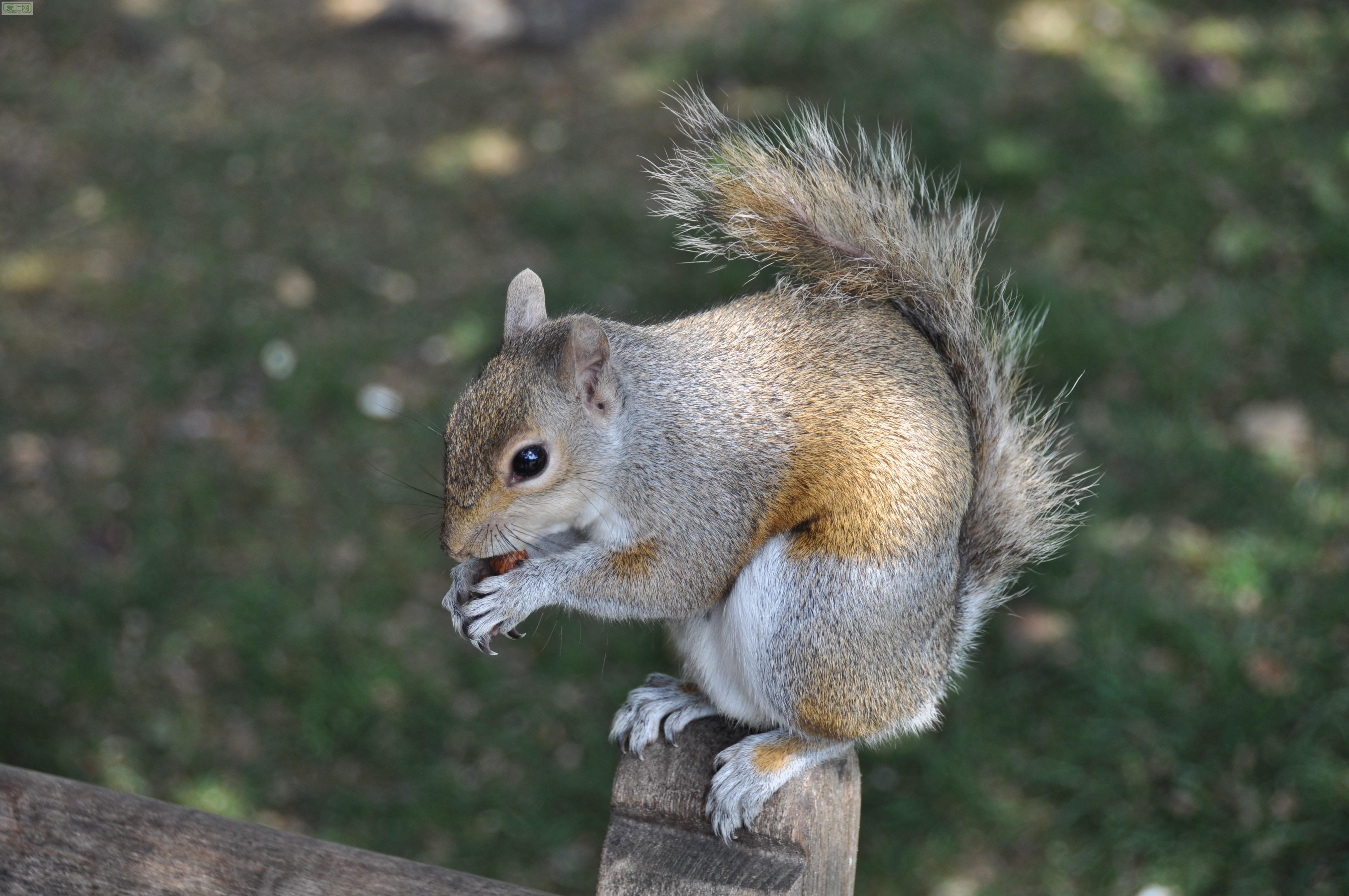 可爱的松鼠|旅游&摄影