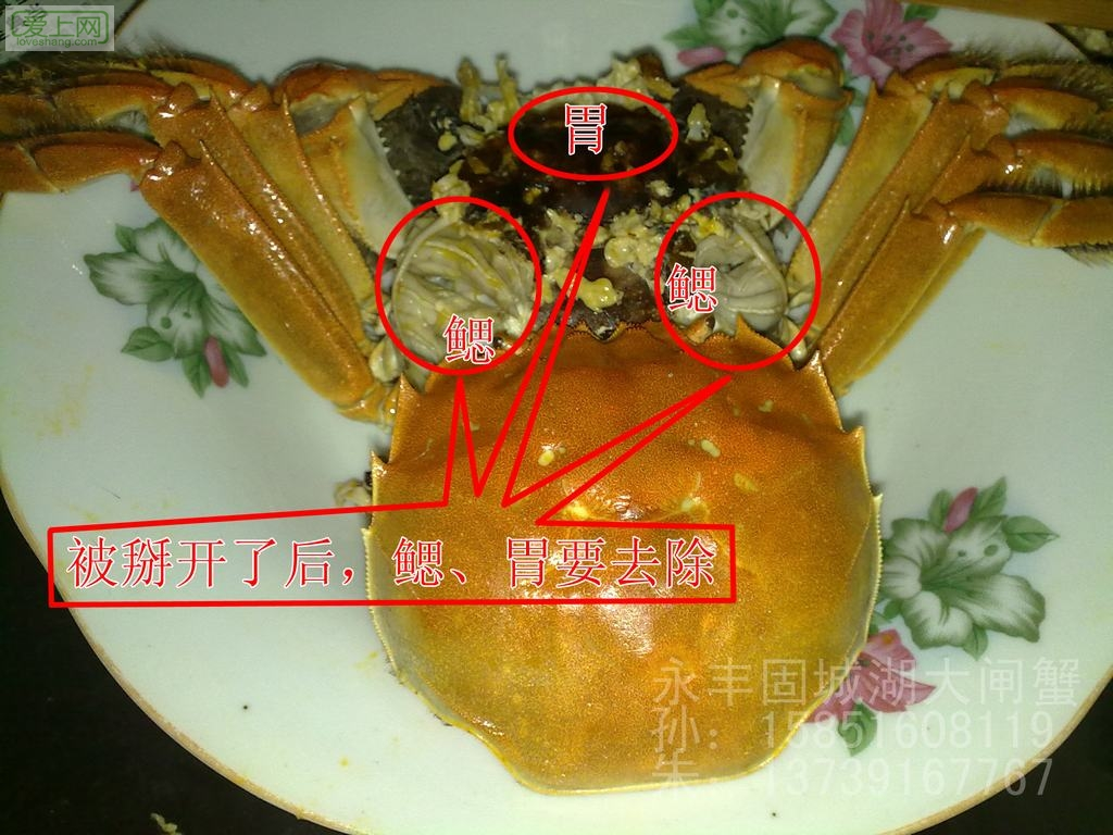 注意螃蟹的鳃和胃是不能吃的