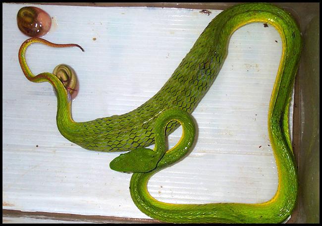 粘土制作可爱动物小蛇
