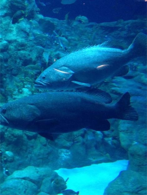 看鱼.png