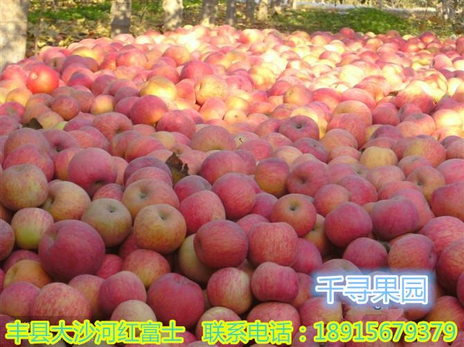 新鲜红富士苹果上市图片